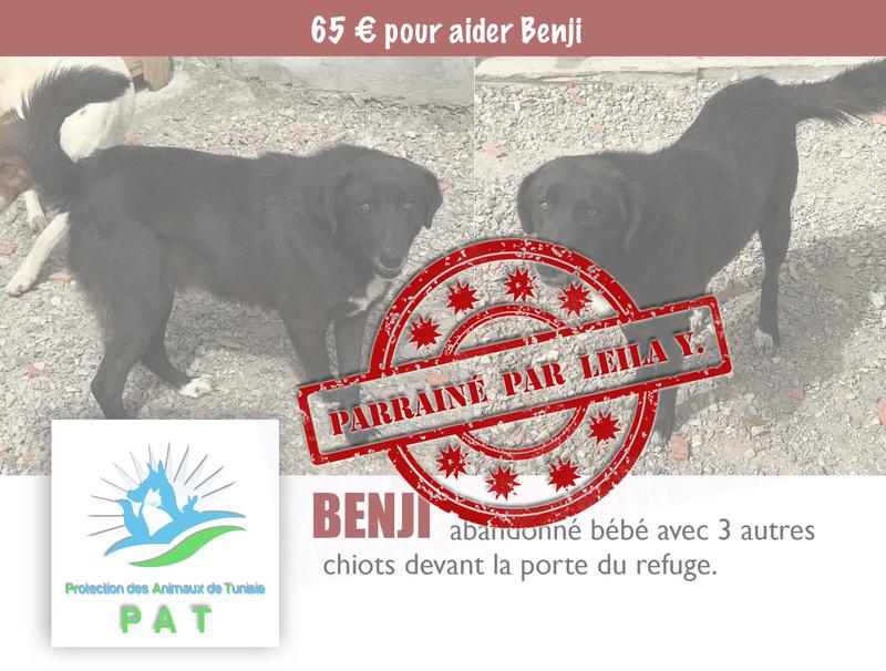 Aide pour stériliser 22 chiens du refuge de la PAT Benjip11