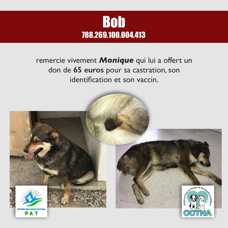 Aide pour stériliser 22 chiens du refuge de la PAT Bobmer12