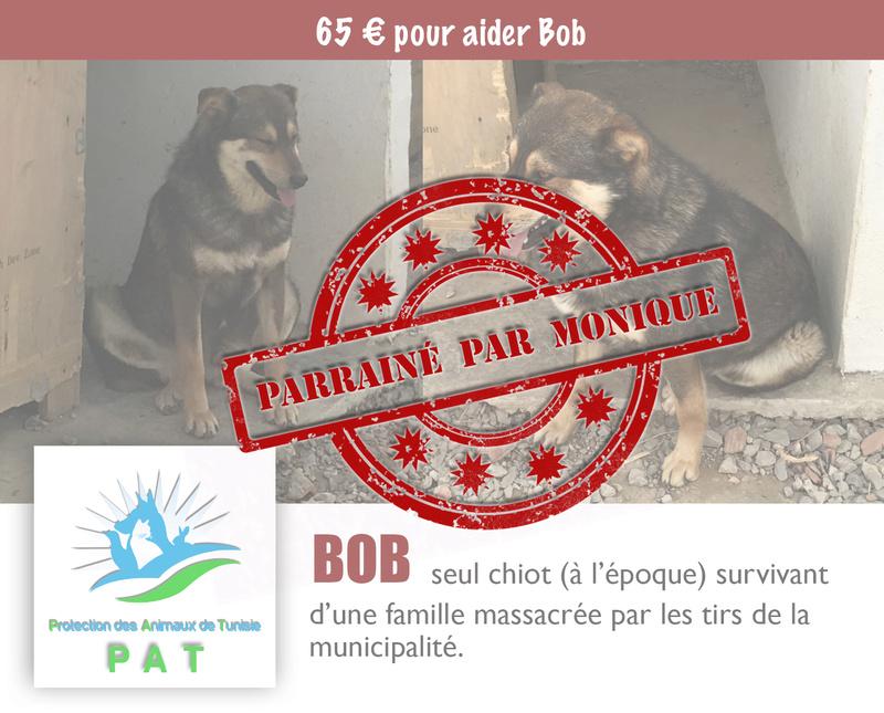 Aide pour stériliser 22 chiens du refuge de la PAT Bobpar10