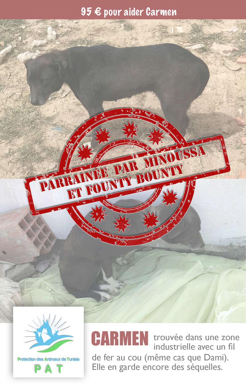 Aide pour stériliser 22 chiens du refuge de la PAT Carmen10