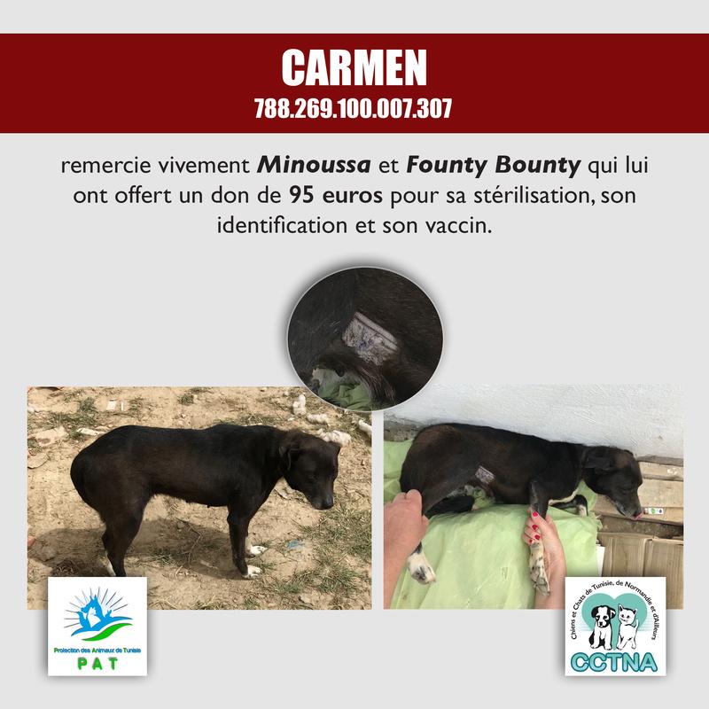 Aide pour stériliser 22 chiens du refuge de la PAT Carmen11