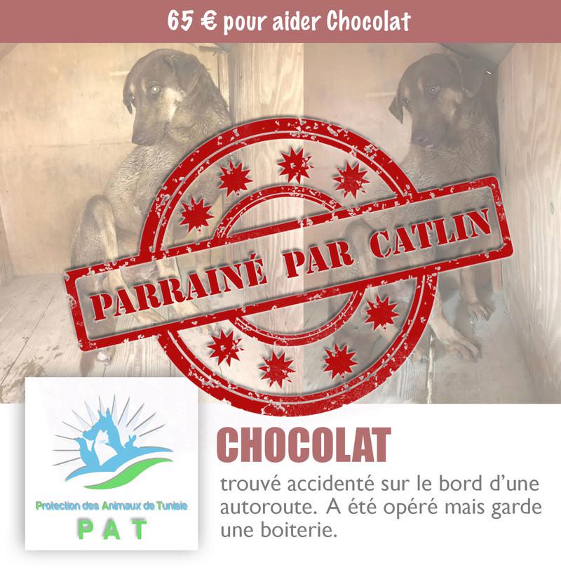 Aide pour stériliser 22 chiens du refuge de la PAT Chocol12