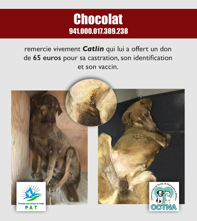 Aide pour stériliser 22 chiens du refuge de la PAT Chocol13