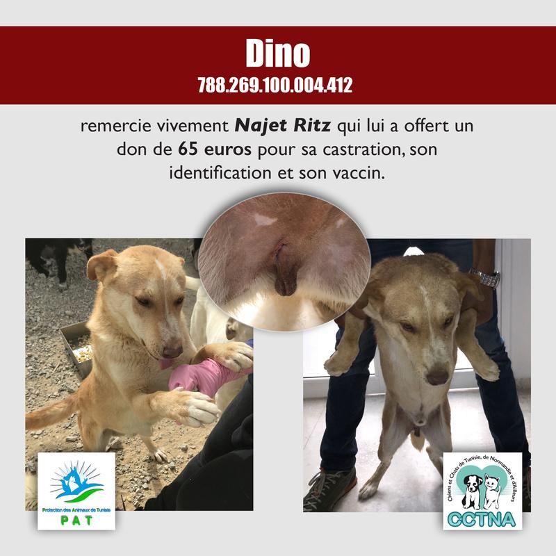 Aide pour stériliser 22 chiens du refuge de la PAT Dinome10