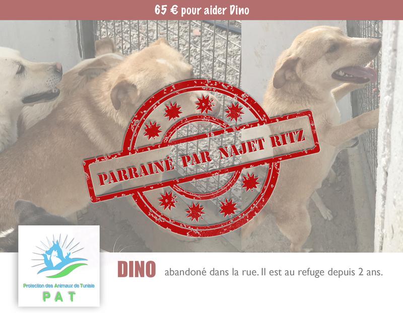 Aide pour stériliser 22 chiens du refuge de la PAT Dinopr10