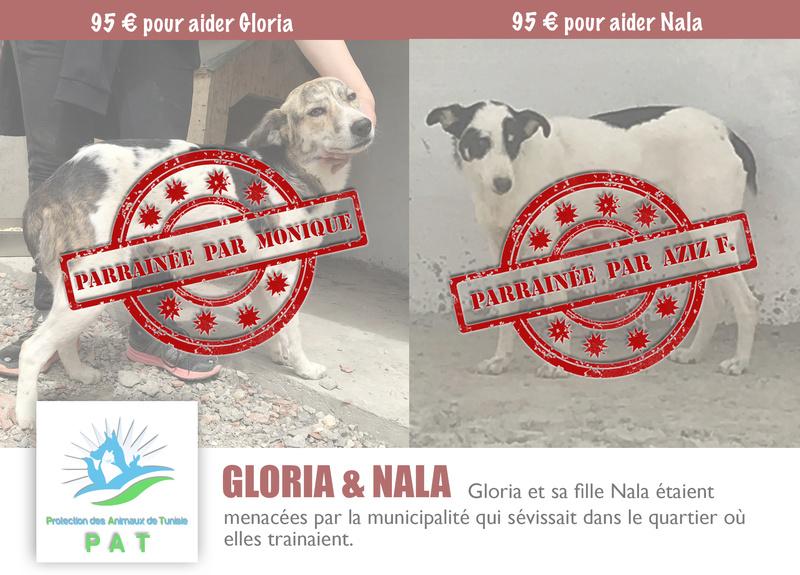 Aide pour stériliser 22 chiens du refuge de la PAT Gloria11