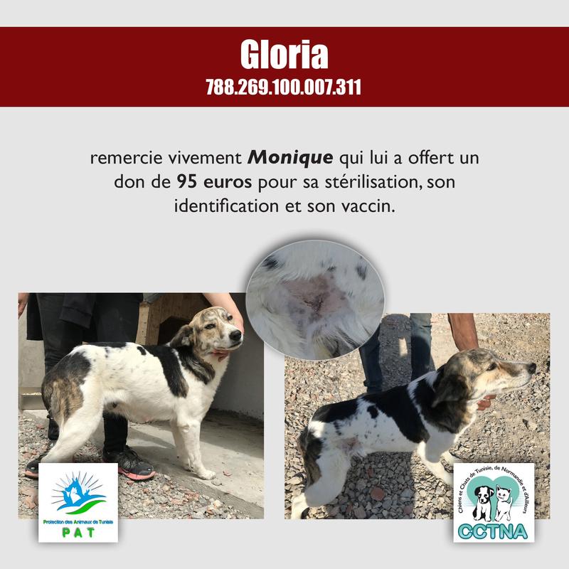 Aide pour stériliser 22 chiens du refuge de la PAT Gloria14