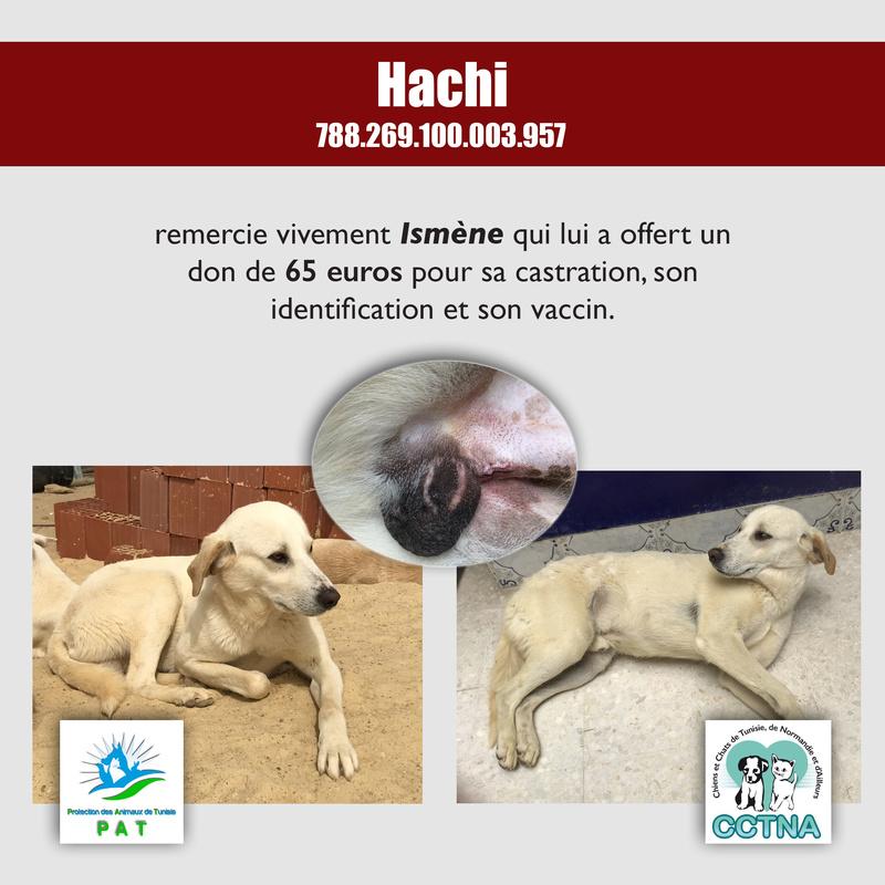 Aide pour stériliser 22 chiens du refuge de la PAT Hachim10