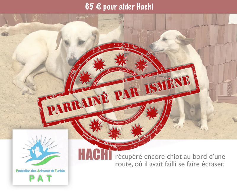 Aide pour stériliser 22 chiens du refuge de la PAT Hachip11