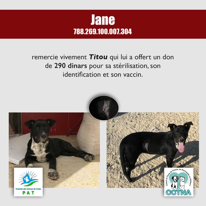 Aide pour stériliser 22 chiens du refuge de la PAT Janeme10