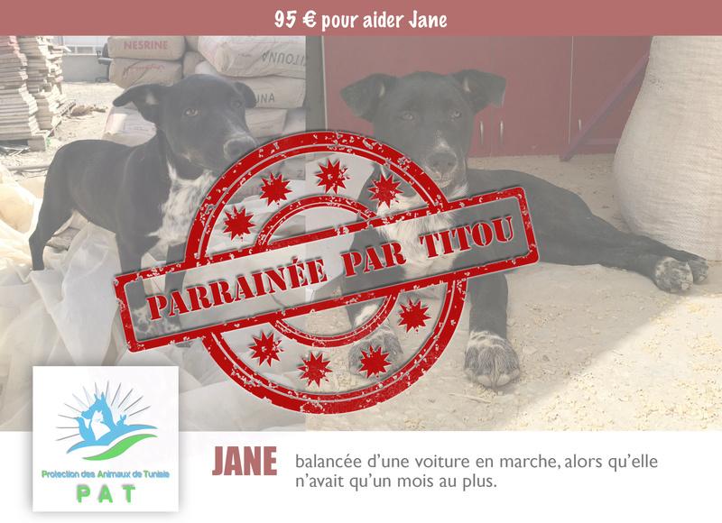 Aide pour stériliser 22 chiens du refuge de la PAT Janepa10