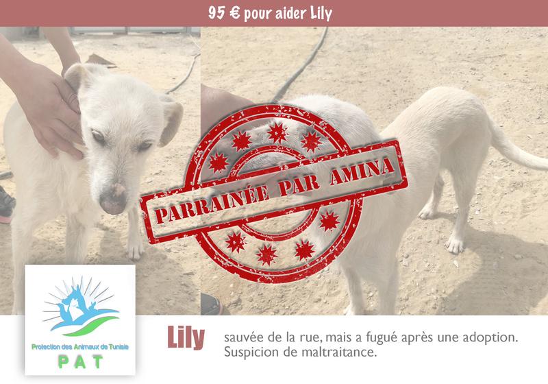 Aide pour stériliser 22 chiens du refuge de la PAT Lilypa10