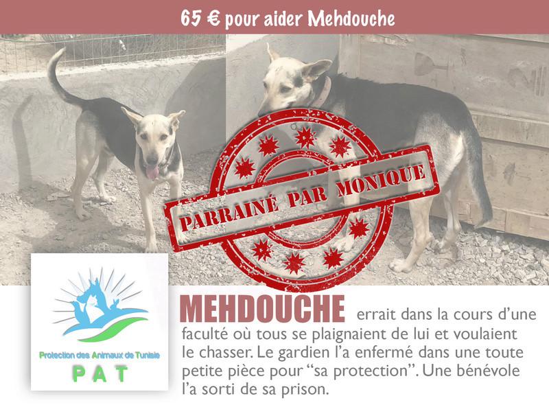 Aide pour stériliser 22 chiens du refuge de la PAT Mehdou11
