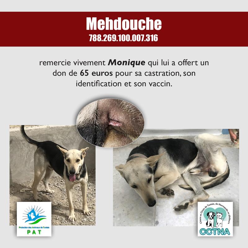 Aide pour stériliser 22 chiens du refuge de la PAT Mehdou14