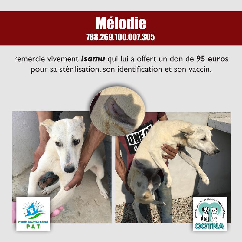 Aide pour stériliser 22 chiens du refuge de la PAT Melody11