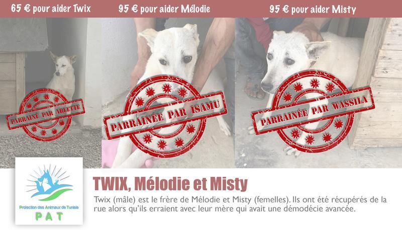 Aide pour stériliser 22 chiens du refuge de la PAT Misty_11