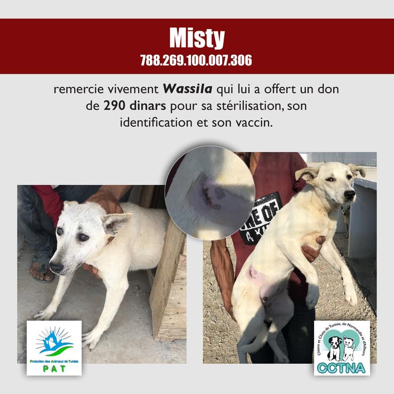 Aide pour stériliser 22 chiens du refuge de la PAT Mistym10
