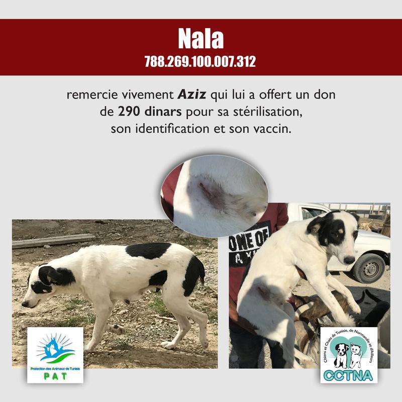 Aide pour stériliser 22 chiens du refuge de la PAT Nalame11