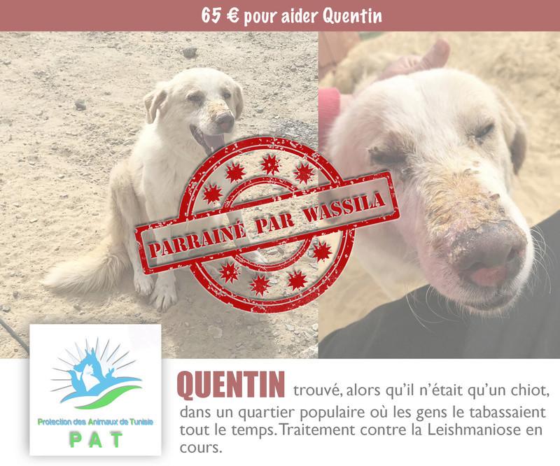 Aide pour stériliser 22 chiens du refuge de la PAT Quenti11