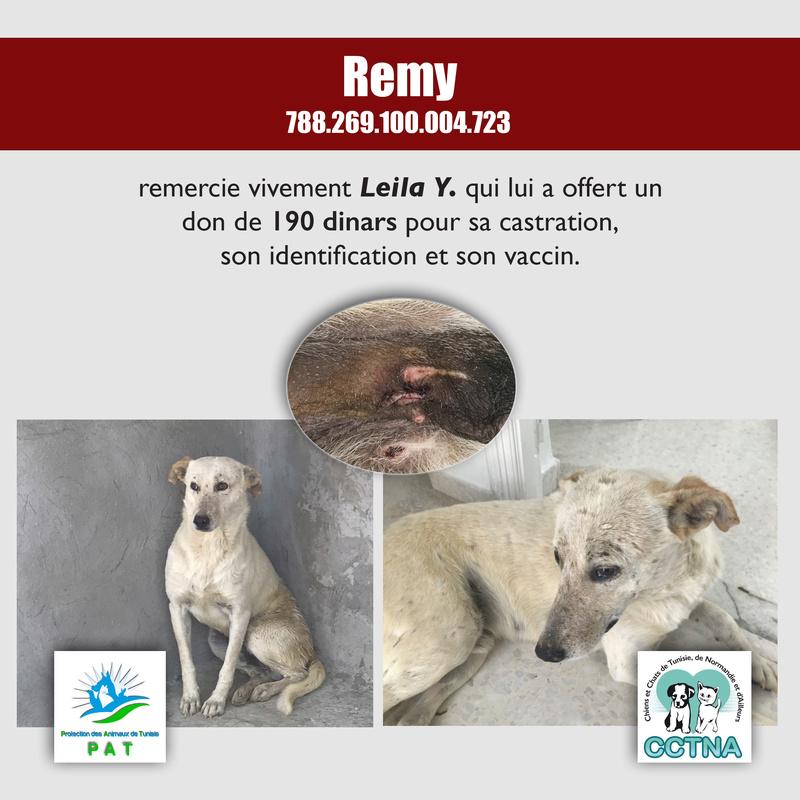 Aide pour stériliser 22 chiens du refuge de la PAT Remyme11