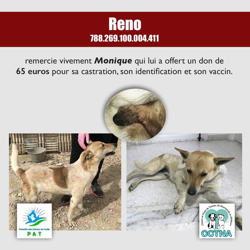 Aide pour stériliser 22 chiens du refuge de la PAT Renome12