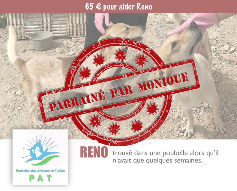 Aide pour stériliser 22 chiens du refuge de la PAT Renopa10