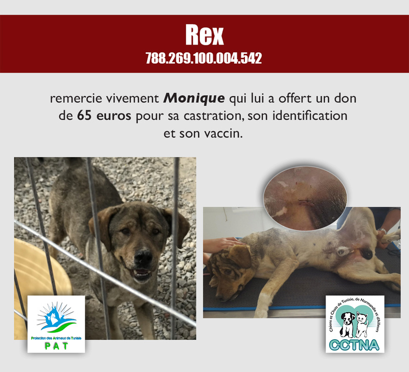 Aide pour stériliser 22 chiens du refuge de la PAT Rexmer12