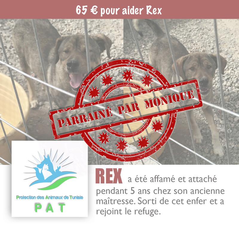 Aide pour stériliser 22 chiens du refuge de la PAT Rexpar10