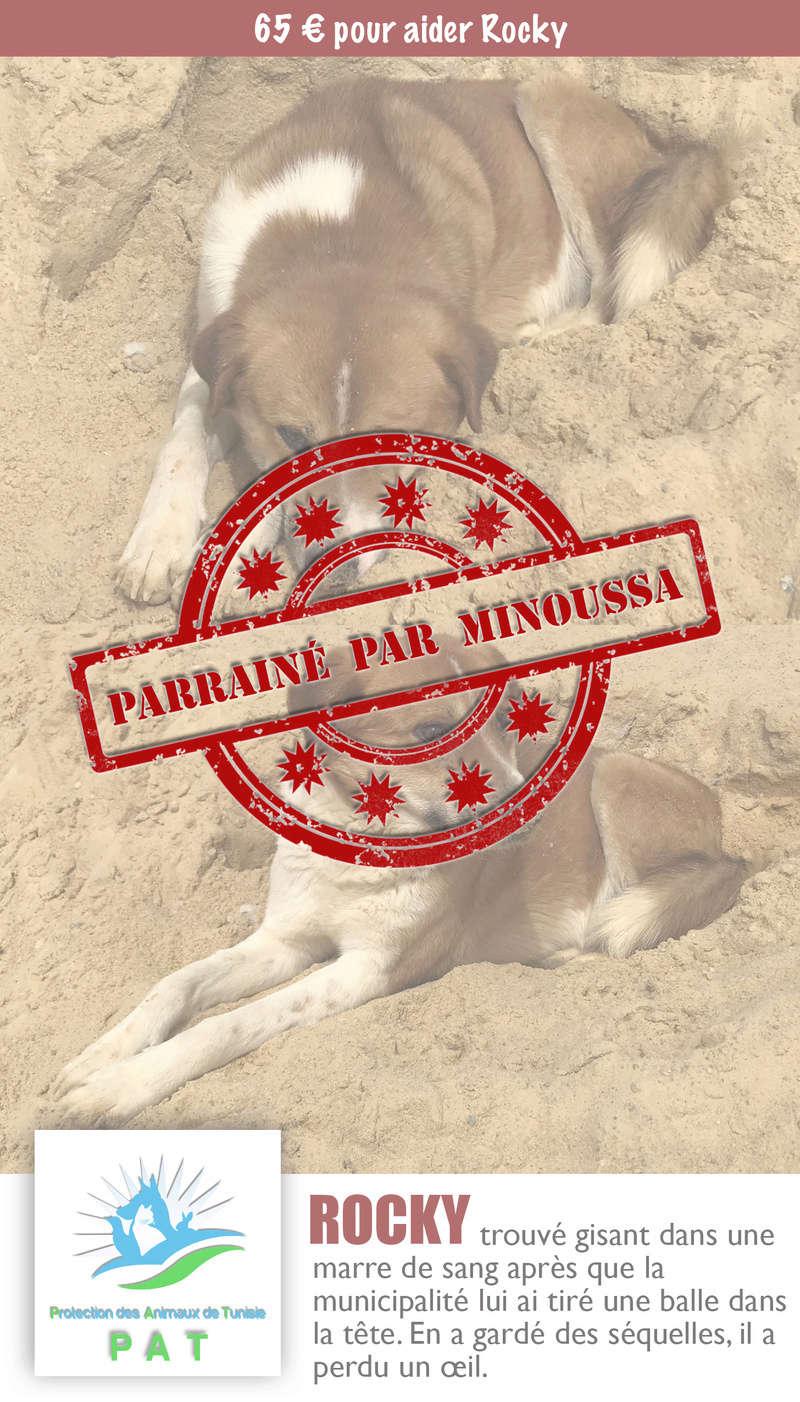 Aide pour stériliser 22 chiens du refuge de la PAT Rockyp11