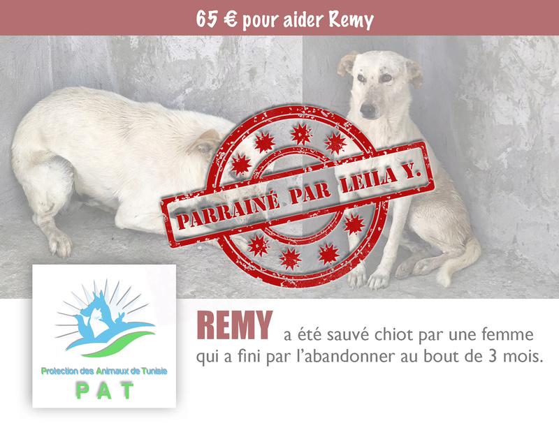 Aide pour stériliser 22 chiens du refuge de la PAT Rymypa12