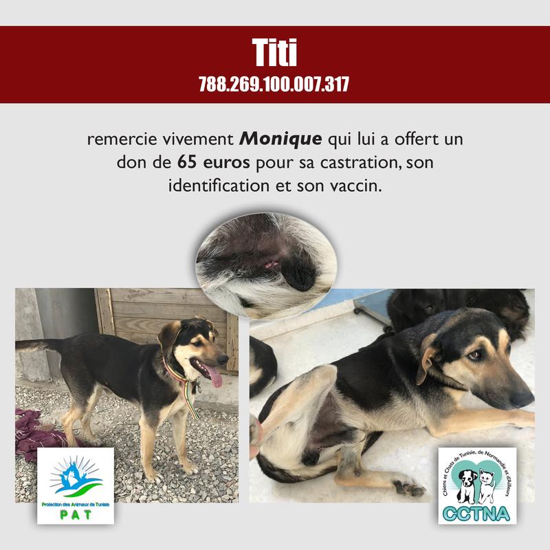 Aide pour stériliser 22 chiens du refuge de la PAT Titime12