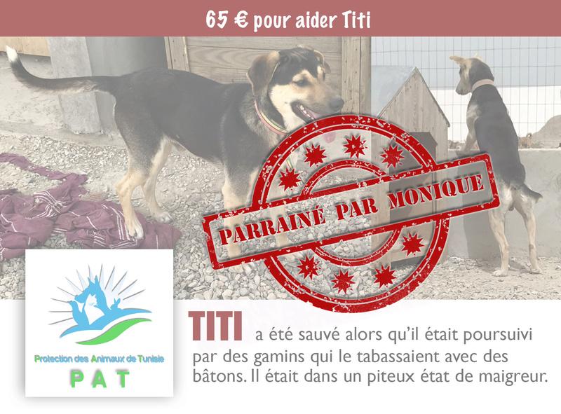 Aide pour stériliser 22 chiens du refuge de la PAT Titipa10
