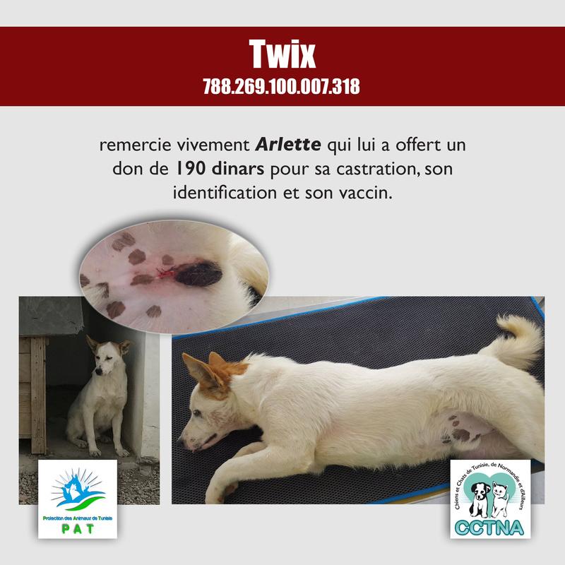 Aide pour stériliser 22 chiens du refuge de la PAT Twixme11