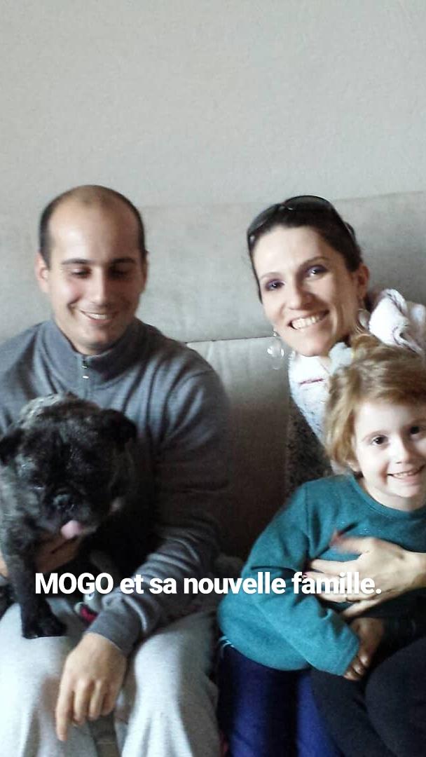 Mogo croisé bouledogue et autre ..... Adopté  Mogo_e10