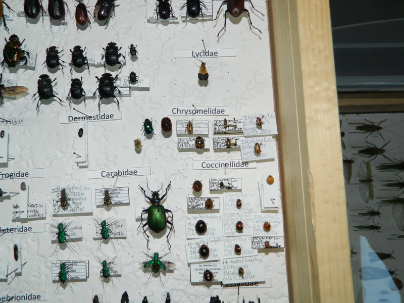Insect collections! Dscn1911