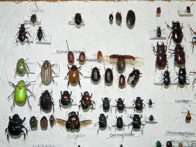 Insect collections! Dscn1912