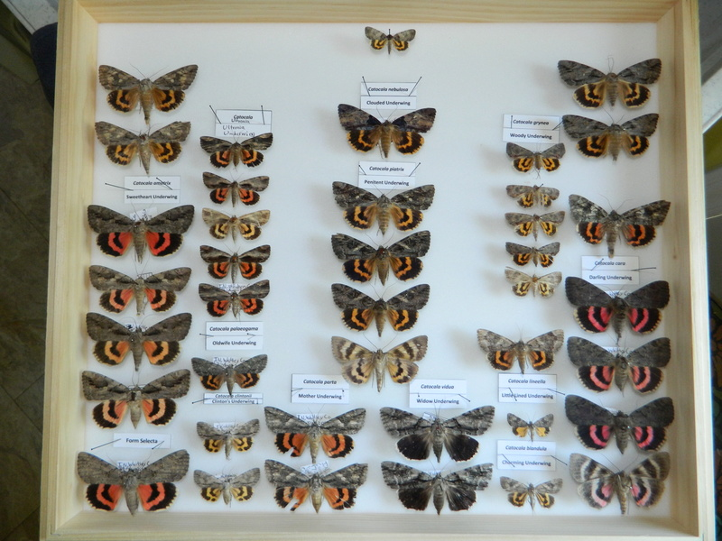 Insect collections! Dscn2510