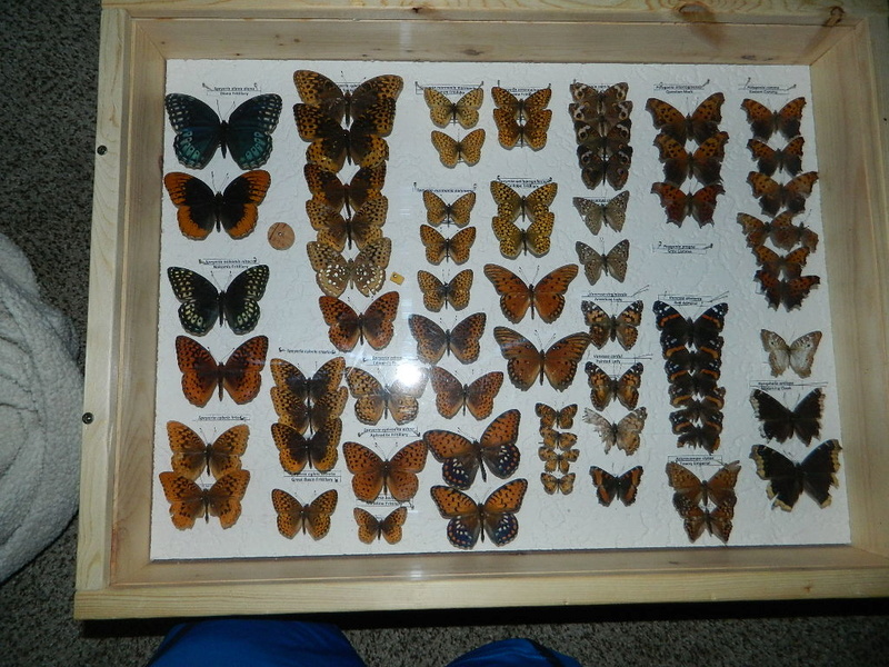 Insect collections! Dscn5110