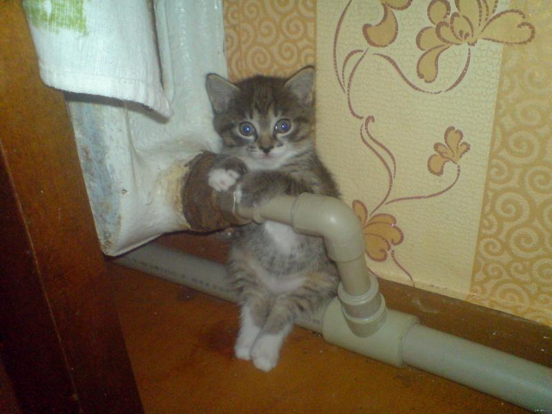 Всемирный День Кошек - Страница 3 14178110