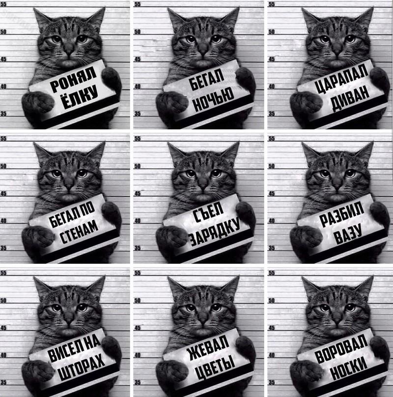 Всемирный День Кошек - Страница 5 14805910