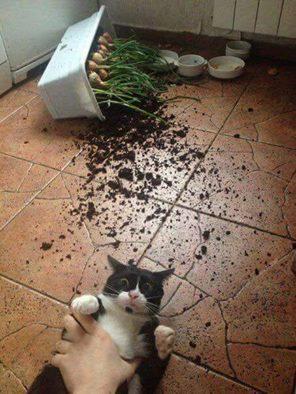 Всемирный День Кошек - Страница 3 15439910