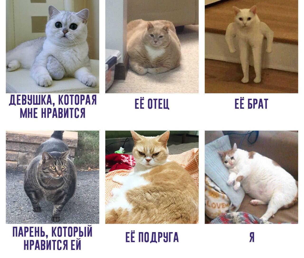 Всемирный День Кошек - Страница 9 172d5810