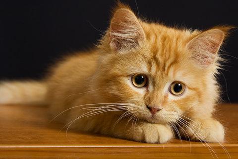 Всемирный День Кошек - Страница 5 18_cat10