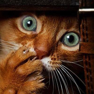 Всемирный День Кошек - Страница 5 23519210