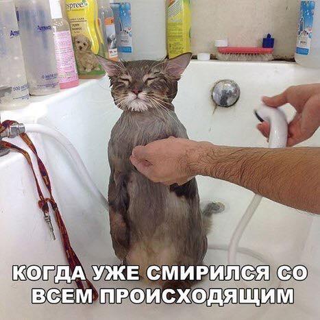 Всемирный День Кошек - Страница 5 23755310