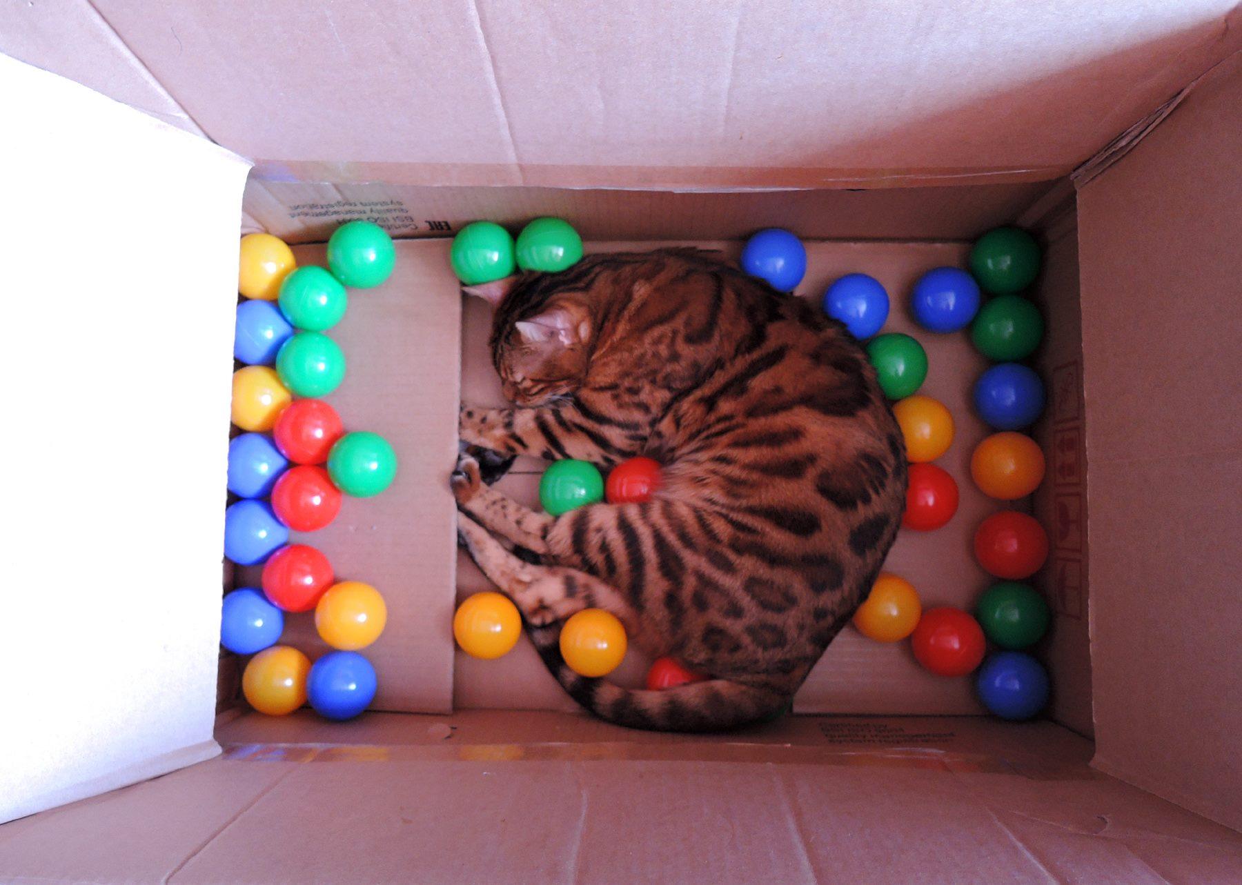 Всемирный День Кошек - Страница 10 30051810