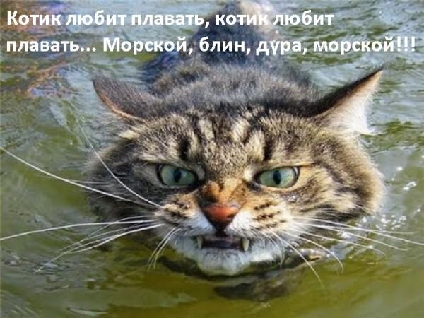 Всемирный День Кошек - Страница 3 31462510