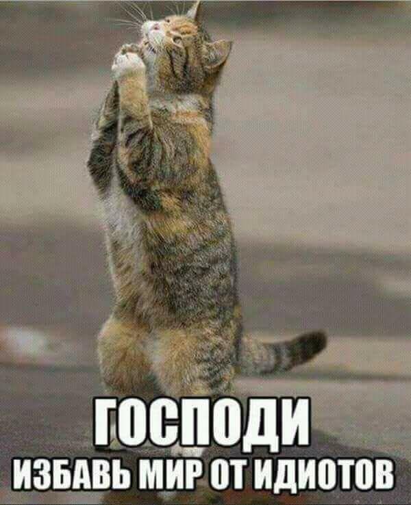 Всемирный День Кошек - Страница 9 32169810
