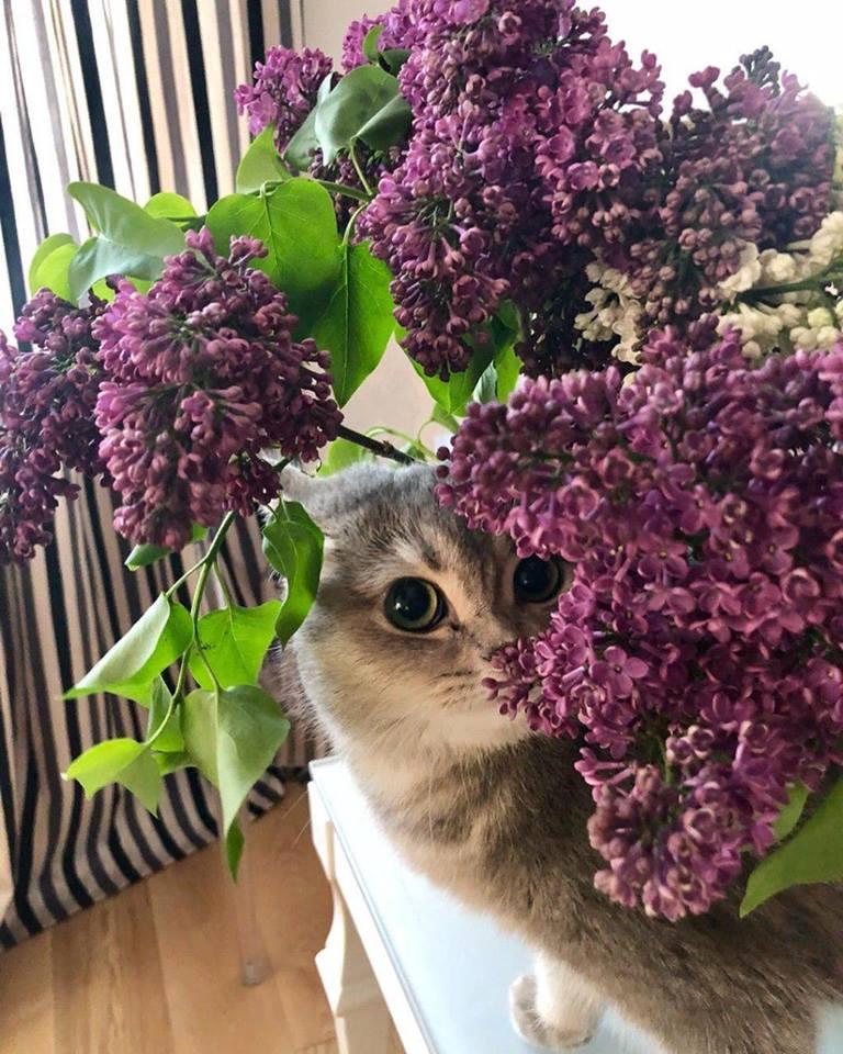 Всемирный День Кошек - Страница 9 32222510