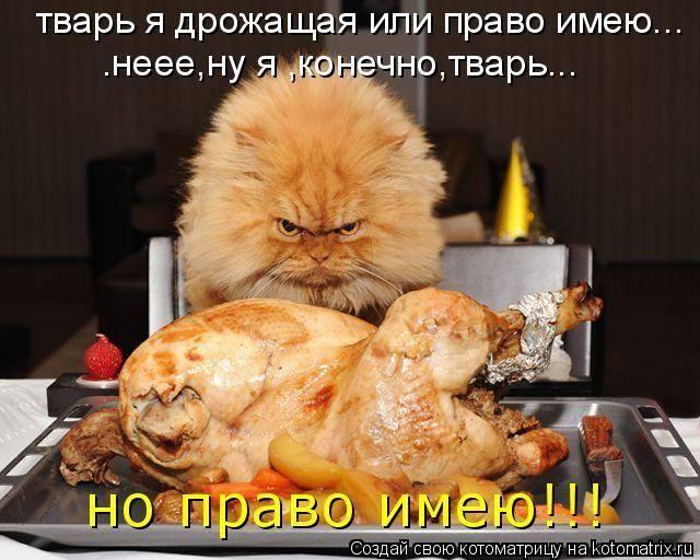 Всемирный День Кошек - Страница 9 33575010